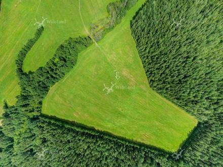 Polianka (Зеленая поляна)